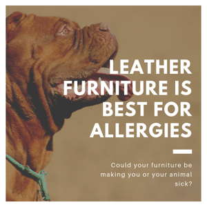 Leather Best for Allergies